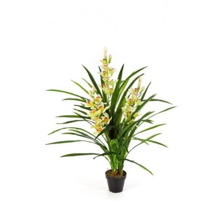 Orchidea - Storczyk Cymbidium - kremowa