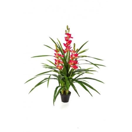 Orchidea - Storczyk Cymbidium - różowy