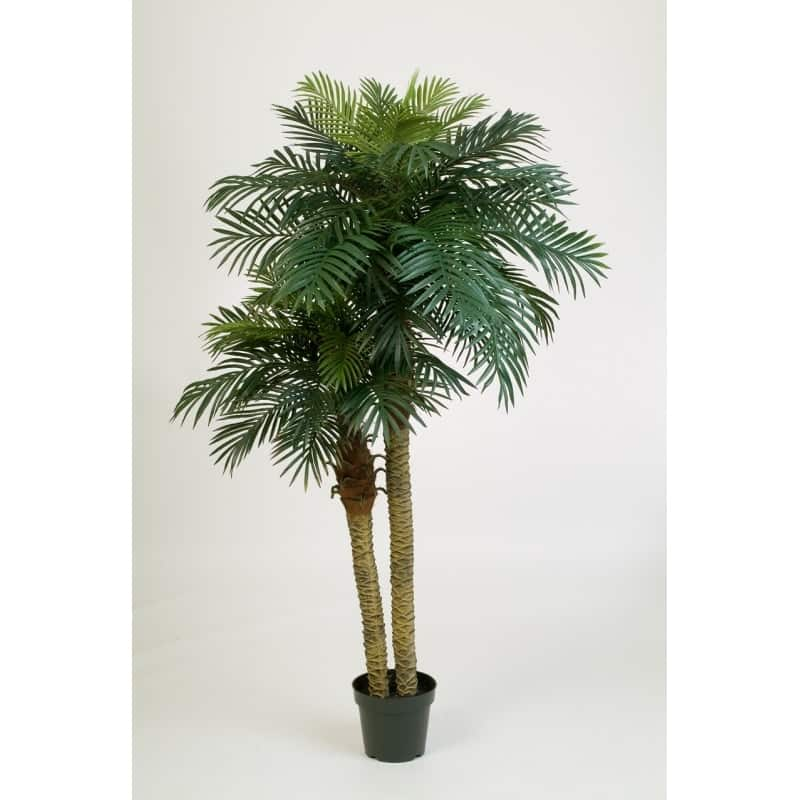 double palm feniks