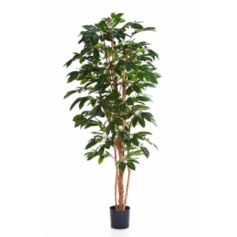 drzewko kawowe