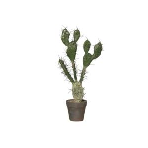 Kaktus 3 Gałązki 58 cm