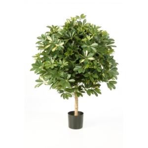 Drzewko Kula z Szeflery 110 cm - Produkt Premium