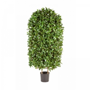 Drzewko Laurowe