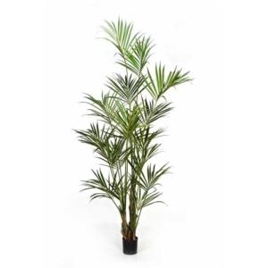 Naturalna Kentia Kencja Palma 260 cm