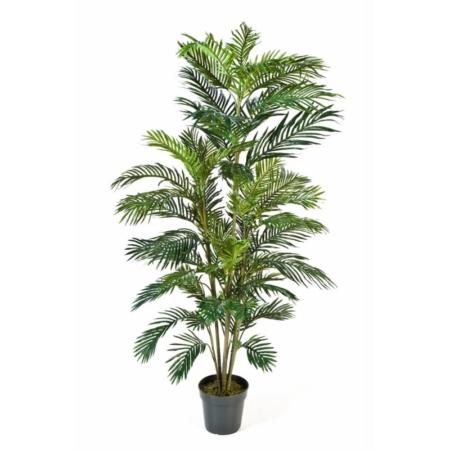 palma areca areka 180 cm aq1