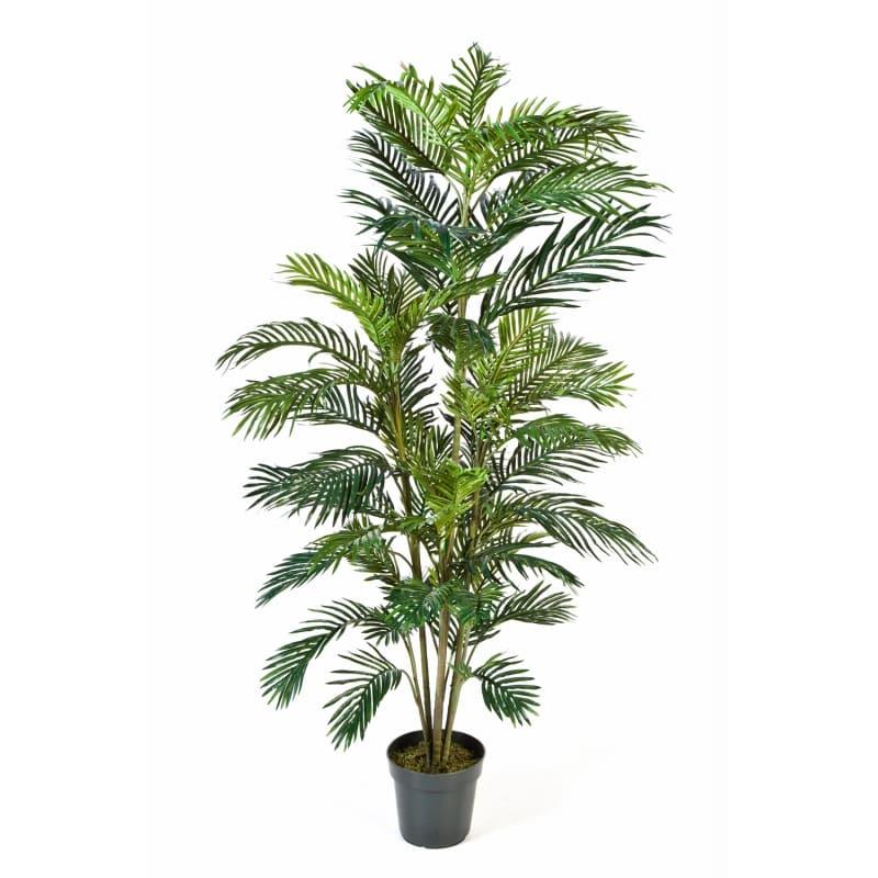 palma areca180cm