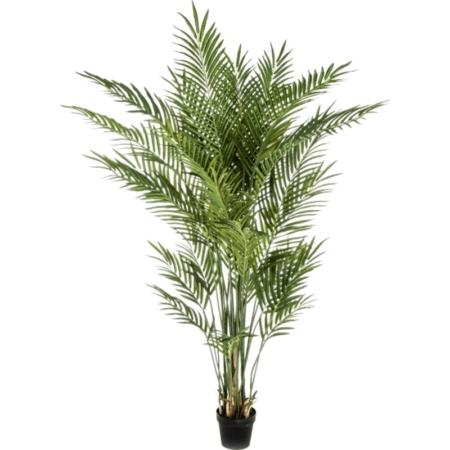 palma areka 170 cm