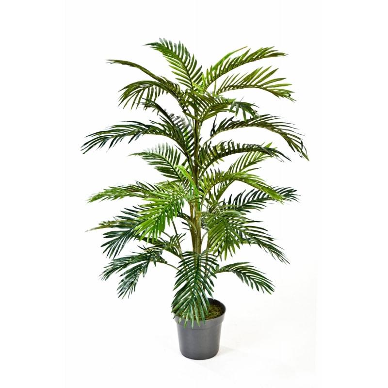 palma areca 120cm