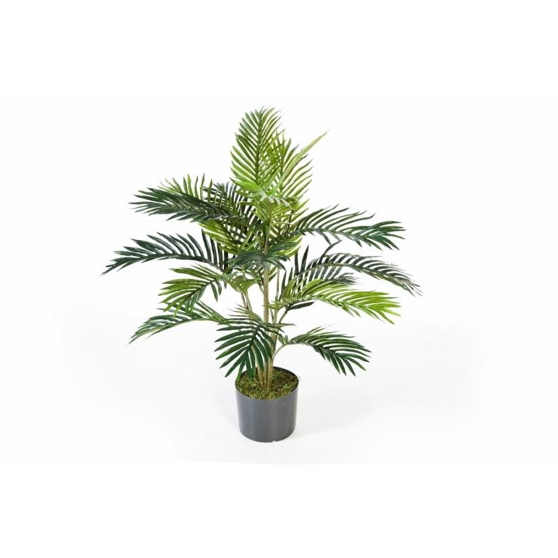 palma-areca-90cm