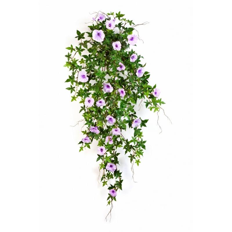 bluszcz-powoj-fiolet