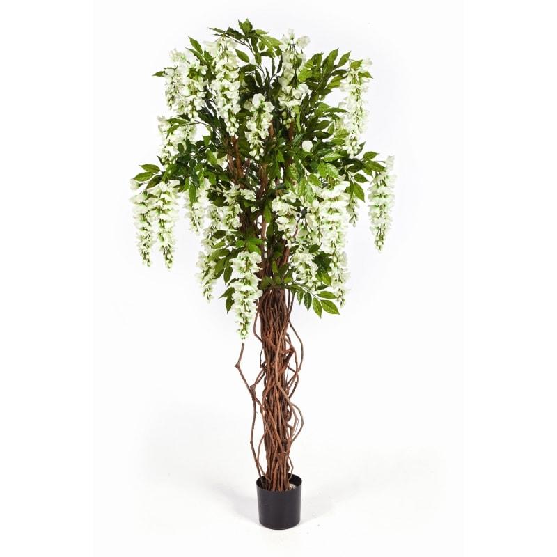 wisteria-krem
