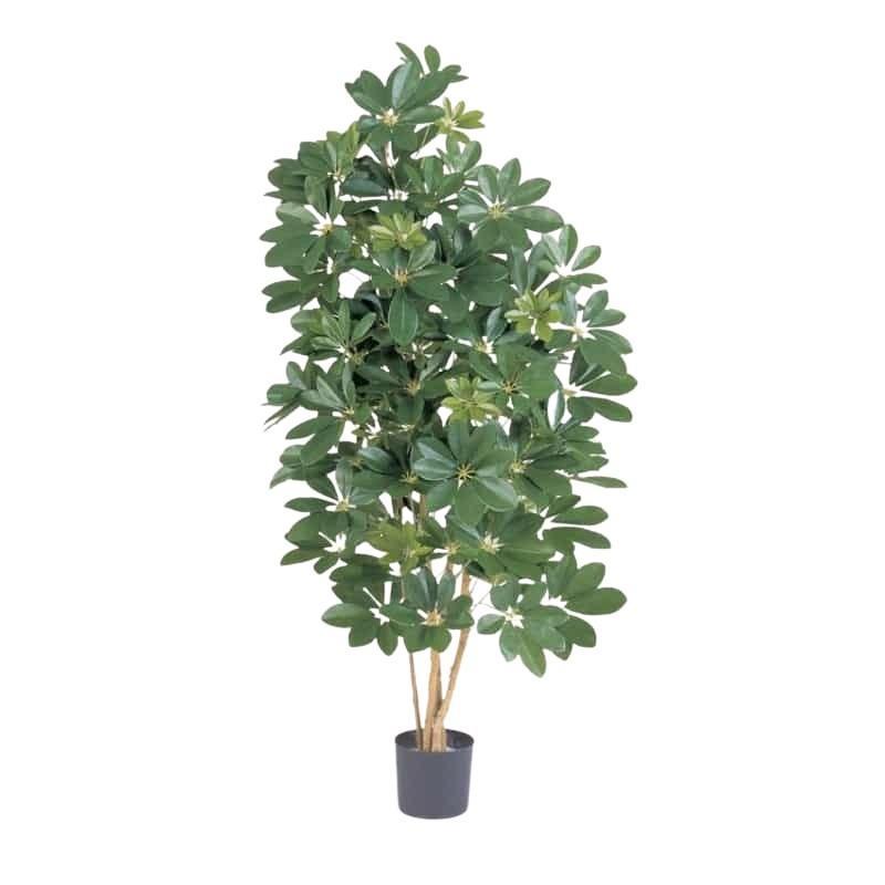 zielona-naturalna-szeflera