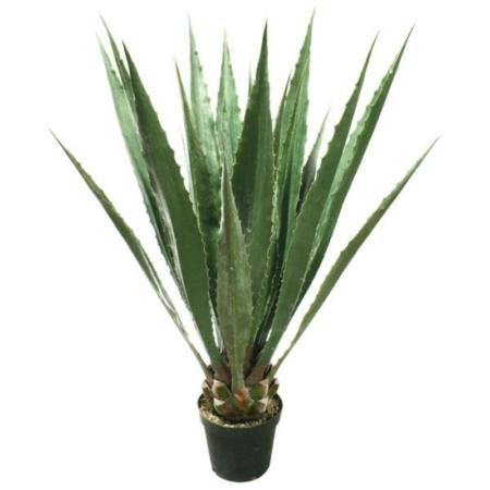 agawa-roslina