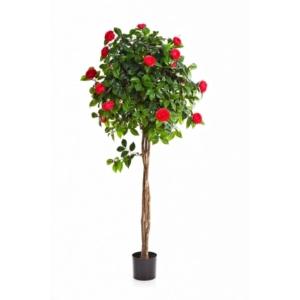 Kamelia Kula- różowa