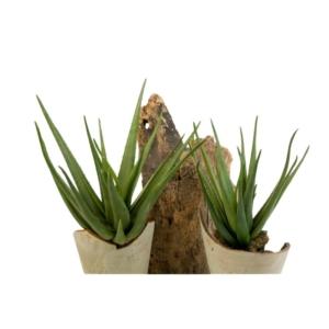 Sztuczny Aloes