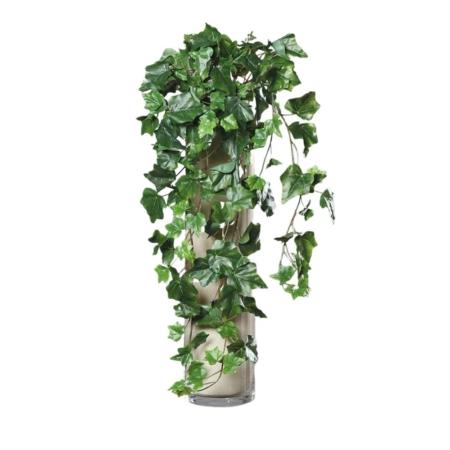 bluszcz zielony 70 cm