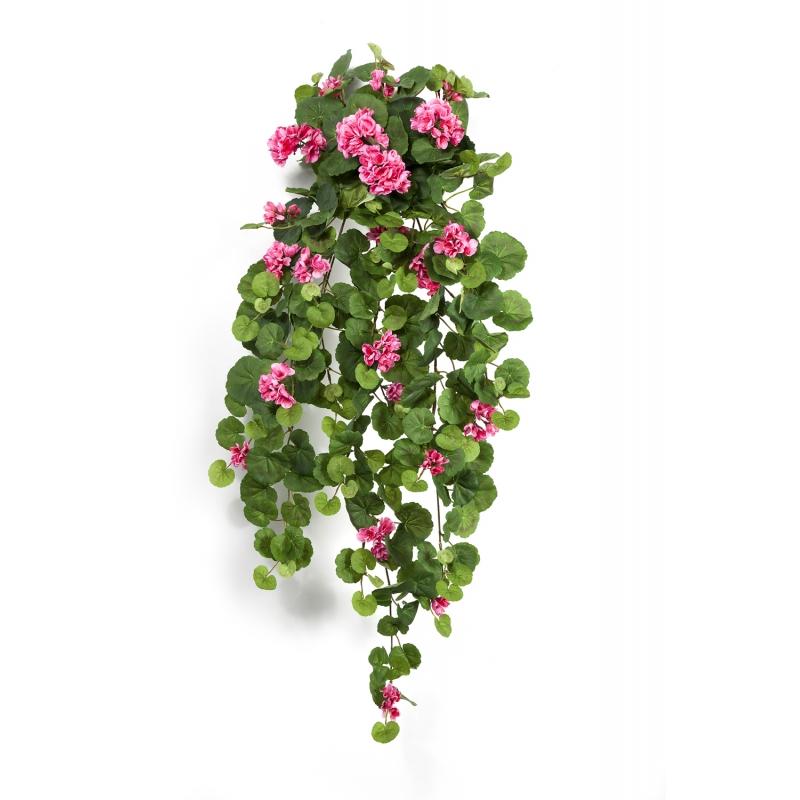 pelargonie-roz