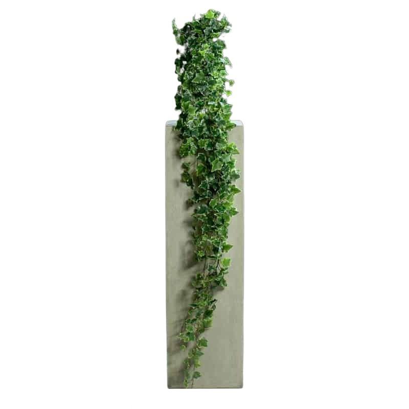 bluszcz-180cm