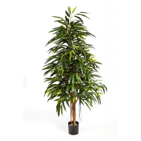 Sztuczna Longifolia
