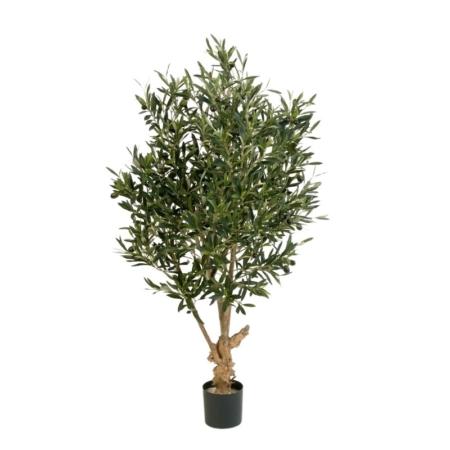 Drzewko oliwne na zakręconym pniu
