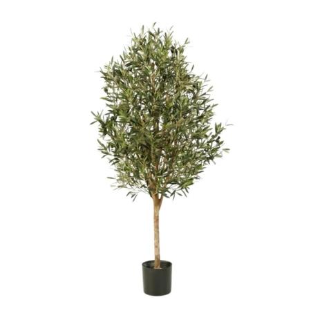 Drzewko oliwne natural vine