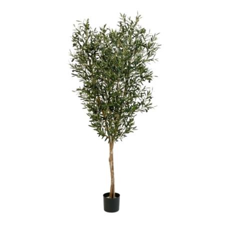 Drzewko oliwne z owocami