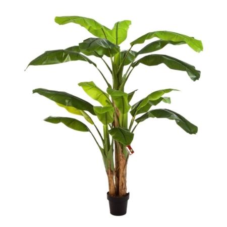 Drzewko Bananowe