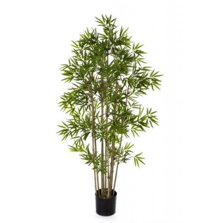 Bambus japoński #2