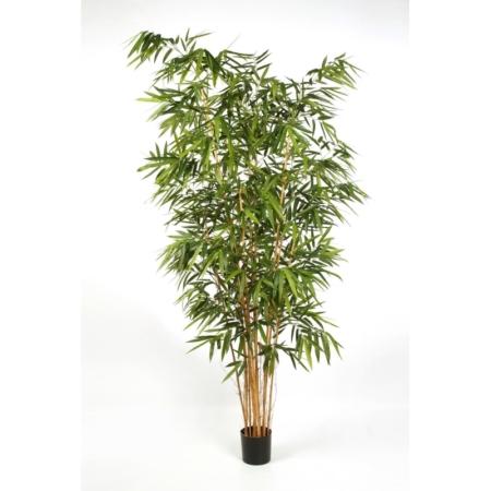 Bambus #5 Duże Liście
