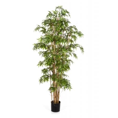 Bambus japoński #3