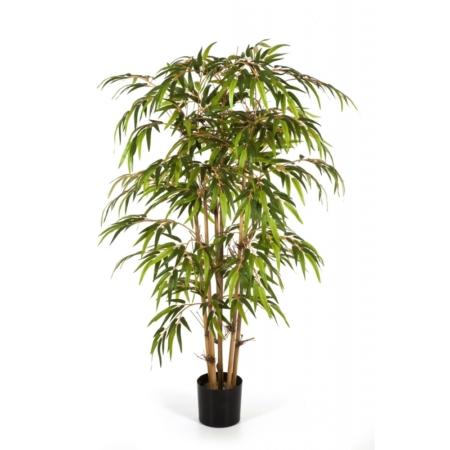 Bambus #4