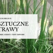 sztuczne trawy zdjęcie blog