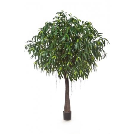 longifolia cabana