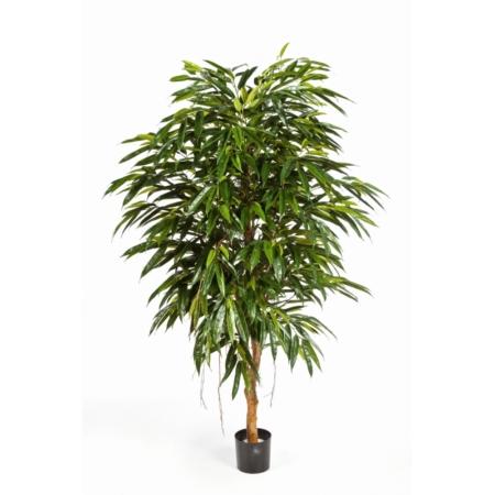 sztuczna longifolia royal