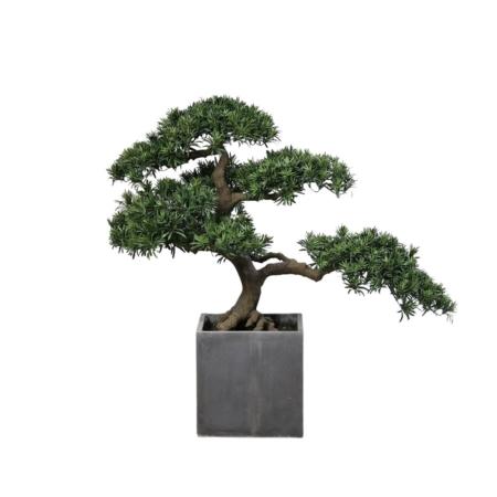 bonsai 100 cm