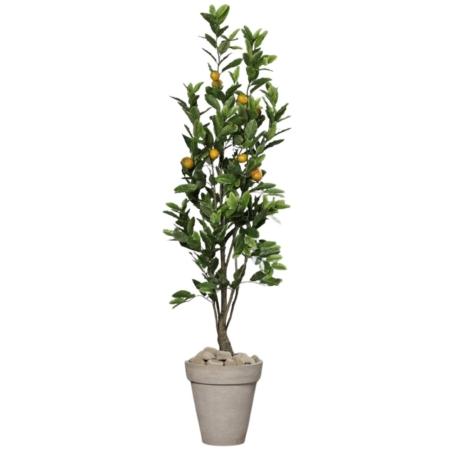 drzewko cytrynowe 180 cm