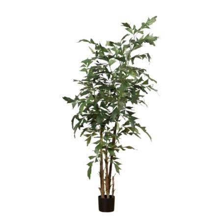 palma karyota 160 cm