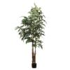 palma karyota 190 cm