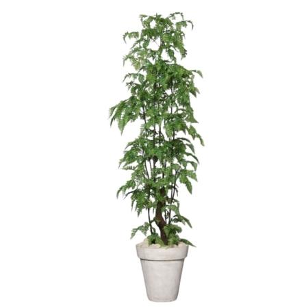 paproć drzewko 180 cm