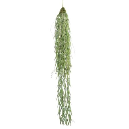 Rhipsalis bluszcz 90 cm