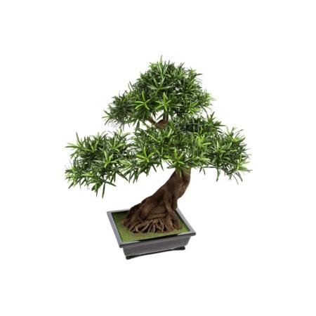 bonsai 80 cm