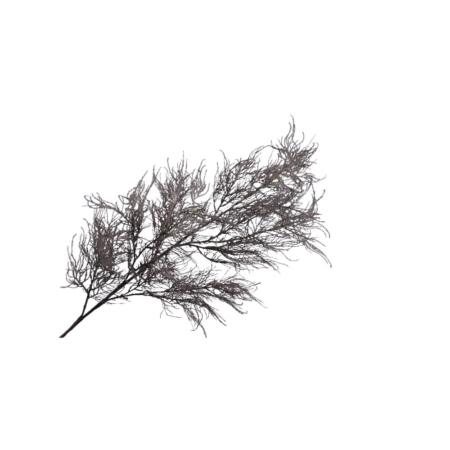 trawa pampasowa gałązka szara 142 cm