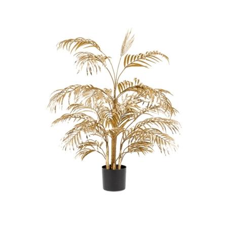 palma areka złota 105 cm