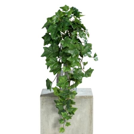 bluszcz zielony duże liście 60 cm