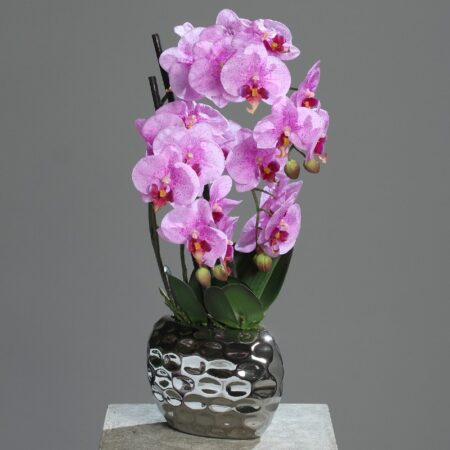 storczyk w srebrnej donicy 50 cm