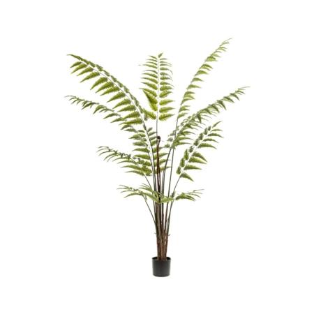 Paproć Drzewiasta 180 cm