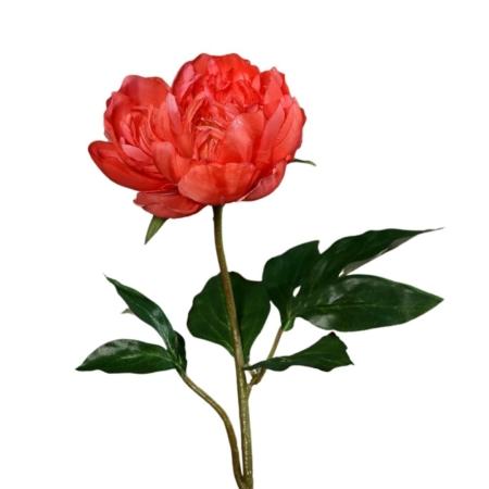 piwonia 57 cm