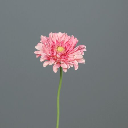 sztuczna gerbera 47 cm różowa