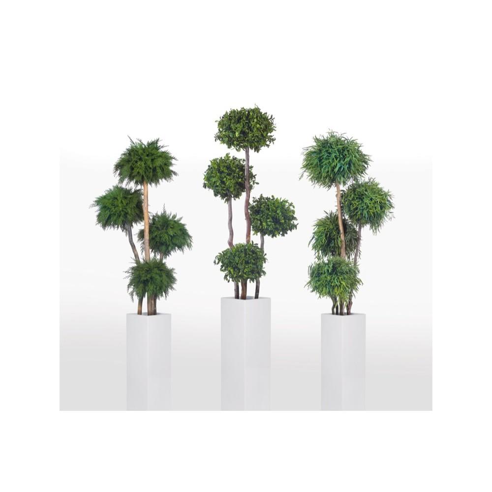 topiary-zestawienie